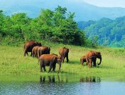 Best Wildlife Destinations in India for the Adventurer and Nature Lover in You