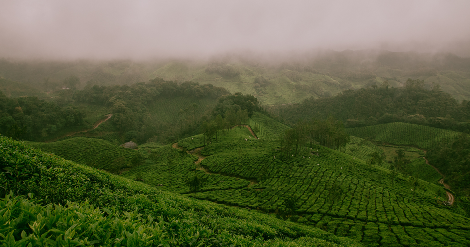 Family Destination in munnar