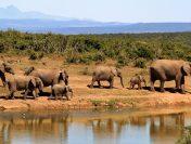 7 Lesser-known Wildlife Destinations in India