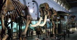Indian-Museum,-Kolkata