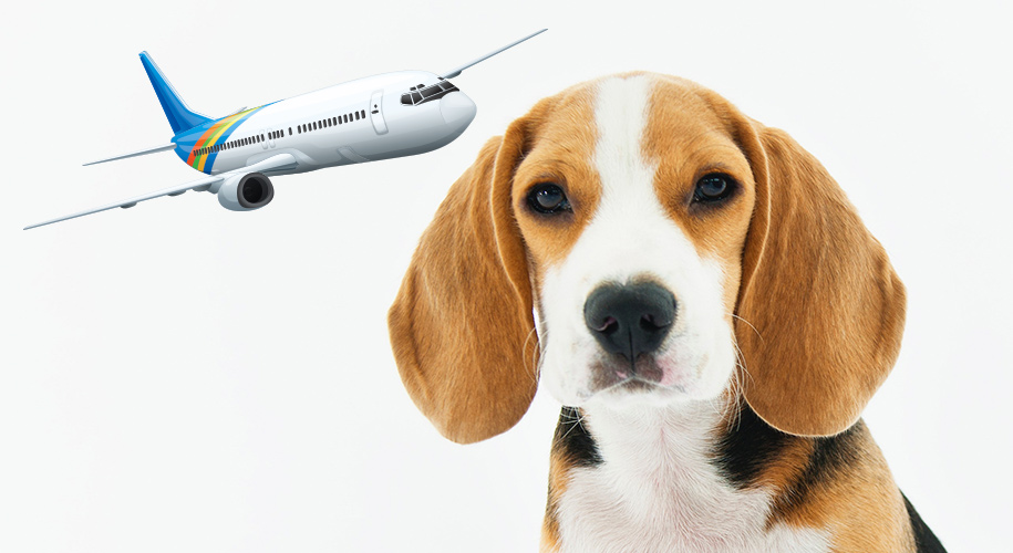 Pet Friendly Airline