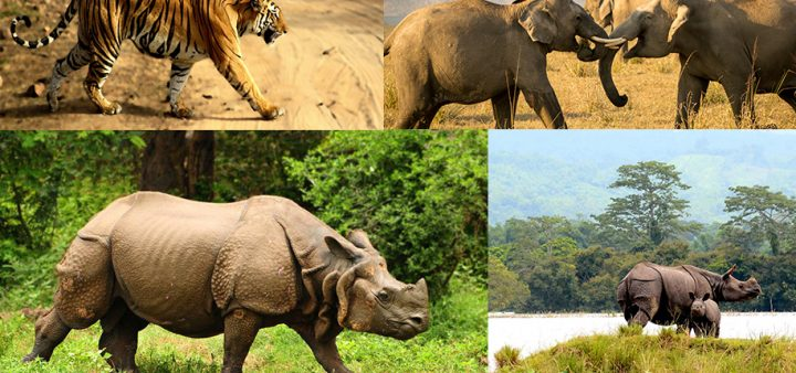 Top Destinations for Best Wildlife Experience in India