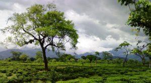 Dooars, West-Bengal