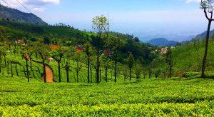 Ooty,-Tamil-Nadu