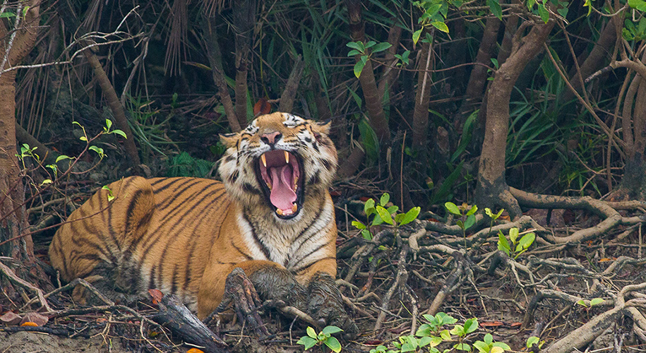 Sundarban National Park, West Bengal