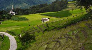 Ziro,-Arunachal-Pradesh