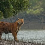 The Sundarbans, West-Bengal