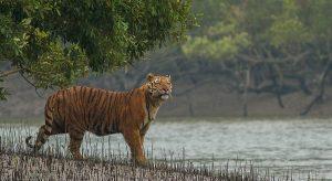 The Sundarbans, West-Bengal