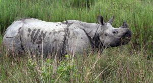 Kaziranga-National-Park,-Assam