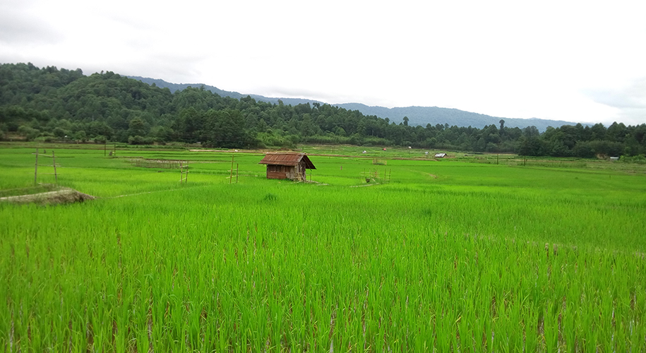 Ziro-Valley,-Arunachal-Pradesh