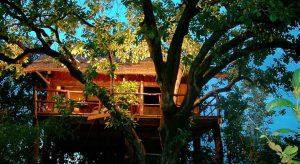 Pugdundee-Safari-Tree-House-Hideaway,-Bandhavgarh-National-Park,-Madhya-Pradesh