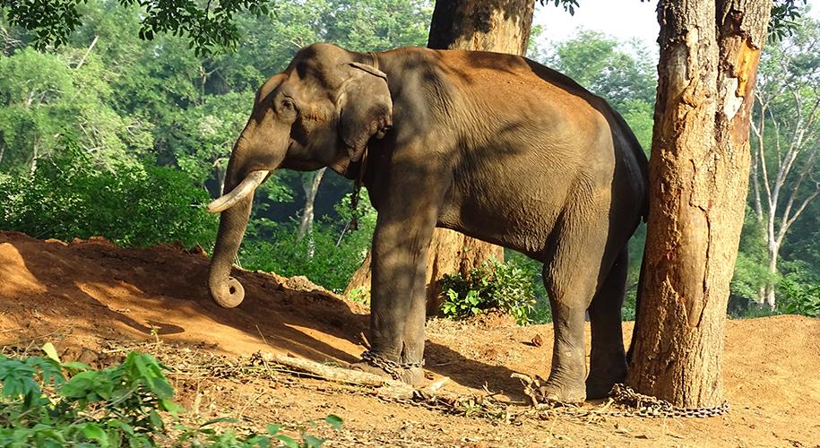 Safari-Land-Bokkapuram,-Tamil-Nadu