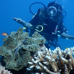 Scuba-diving-in-Andaman