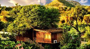 Tree-House-Resort,-Jaipur