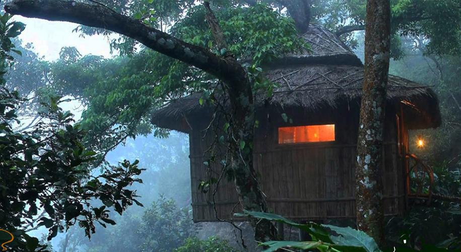 Vanya Tree House