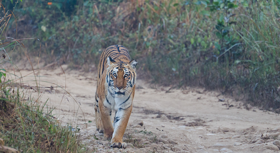 Wildlife-safari-at-Jim-Corbett