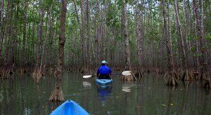 Kayaking amidst Mangroves