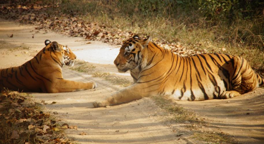 Kanha-Tiger-Reserve