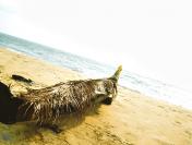 Best Beaches in India to Explore in 2021