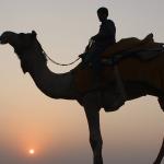Camel-Safari