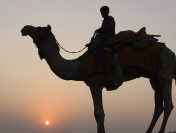 Best Things to do on a Jaisalmer Trip